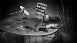 Sir John Lubbocks Pet Wasp 6040 16 512x288