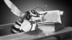 Sir John Lubbocks Pet Wasp 6040 25 512x288